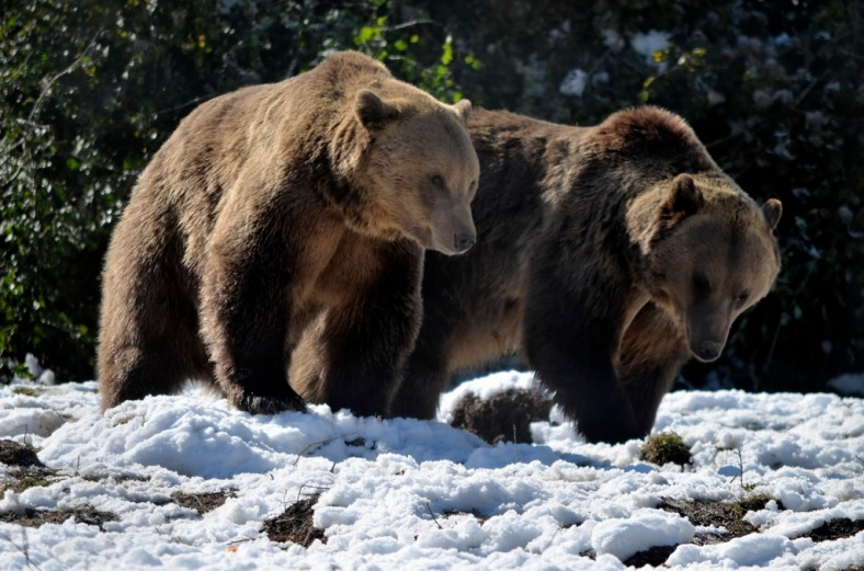 Bear Sanctuary 03