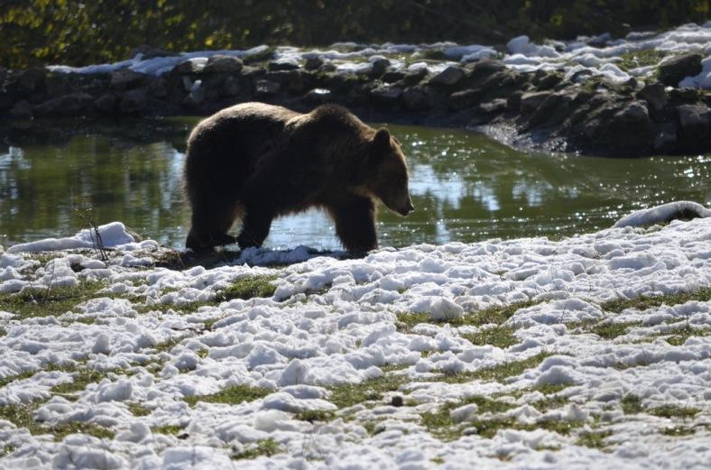 Bear Sanctuary 44