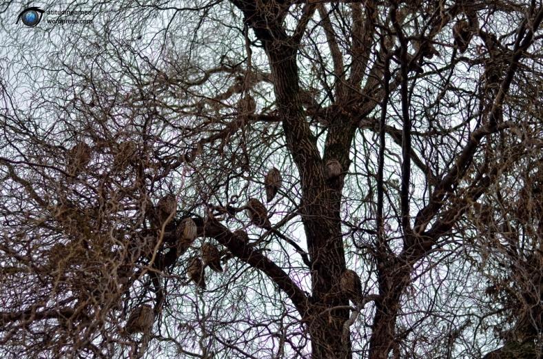 Copacul bufnitelor 01